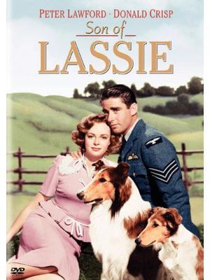 名犬ラッシー/ラッシーの息子