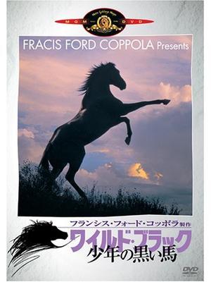 ワイルド・ブラック/少年の黒い馬