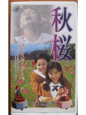 秋桜 コスモス