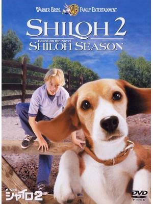 ビーグル犬 シャイロ2