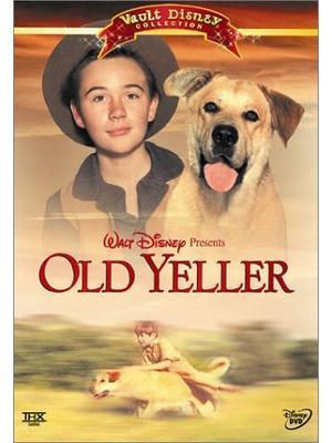 黄色い老犬